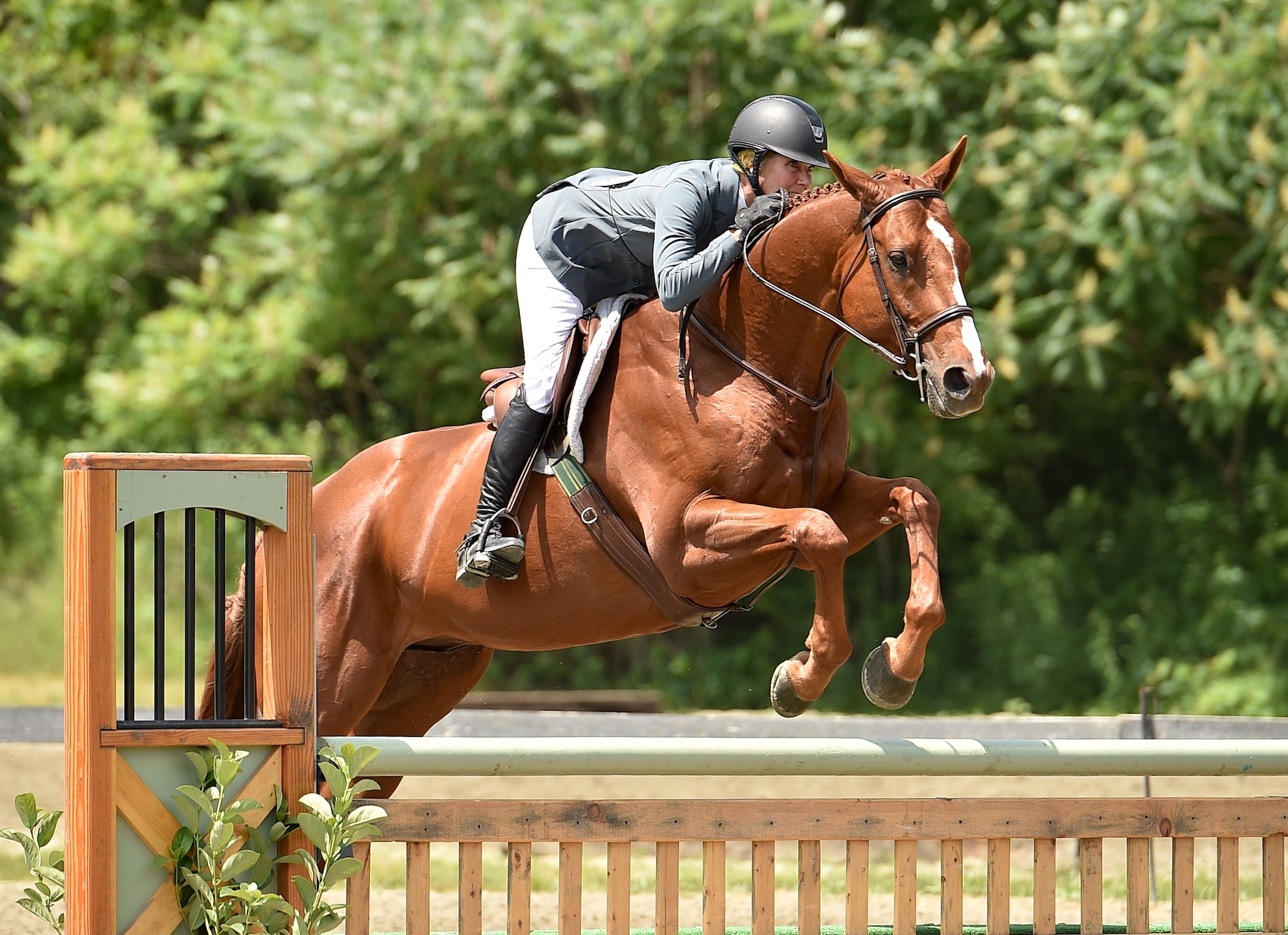 Southern Charm, ridden by Lainie Wimberly, was named champion of the TAKE2 Thoroughbred Hunter Division during opening week of the 2018 Vermont Summer Festival in East Dorset, VT.<br><b>Photo by <a href='http://www.andrewryback.com/' target='_blank'>Andrew Ryback Photography</a></b>
