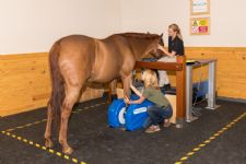 Palm Beach Equine Clinic Saves Horse Owners Time and Money Through Early Diagnosis