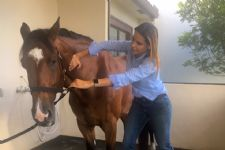 A Day In The Life with Palm Beach Equine Clinic's Dr. Natalia Novoa