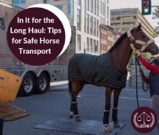 Tips for Safe Horse Transport and More