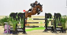 Meet Our Clients: World Equestrian Center