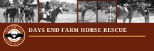 Days End Farm Horse Rescue Receives Grant to Expand Footprint and Enhance Equine Welfare Offerings